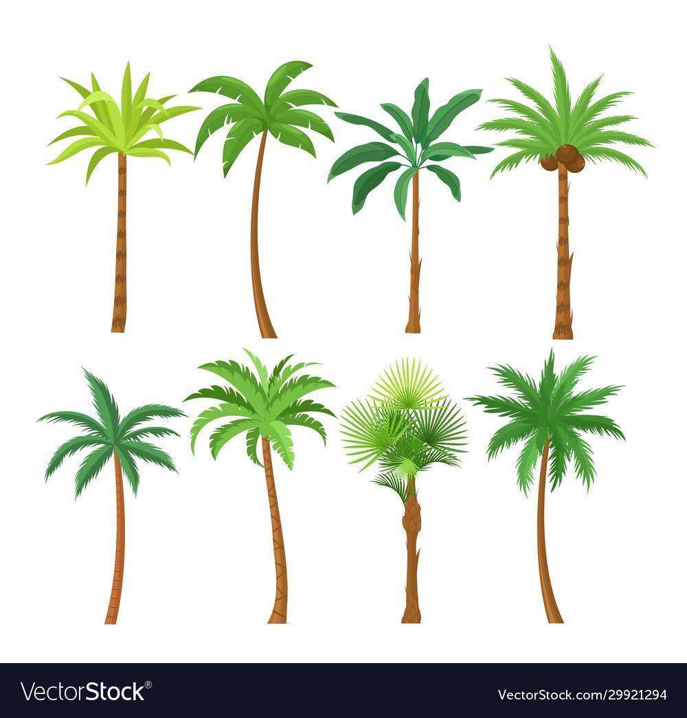 Palm trees flat set exotic