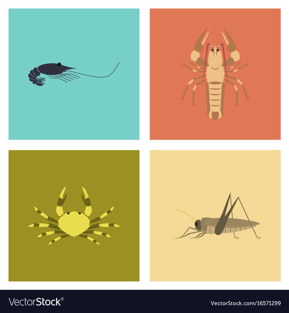 Assembly flat shrimp lobster crab grasshopper vector image