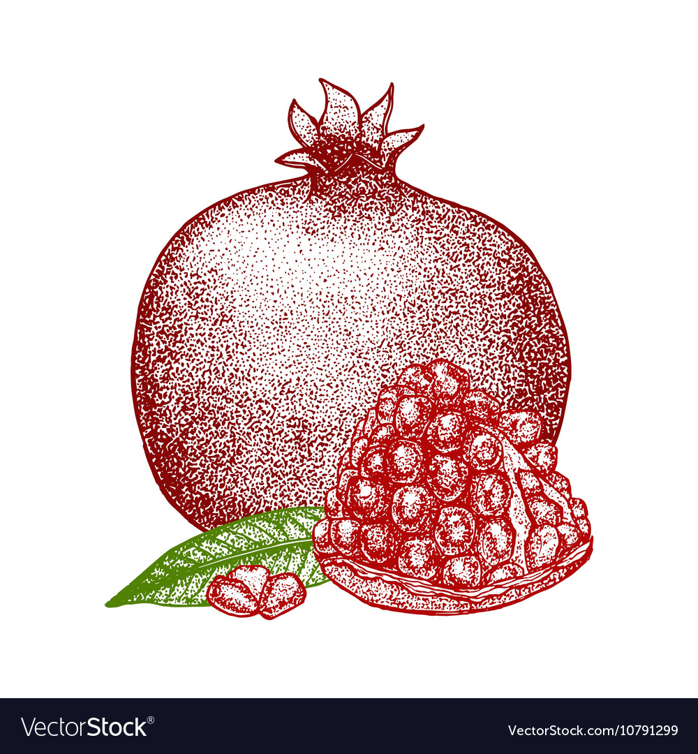 35  Latest Pomegranate Fruit Drawing Images