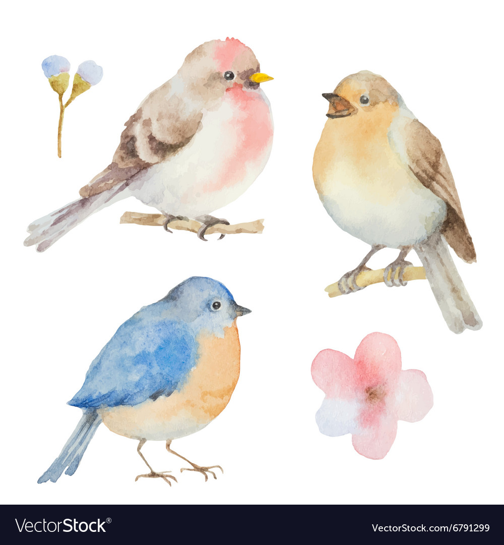 Set Of Watercolor Birds And Flowers