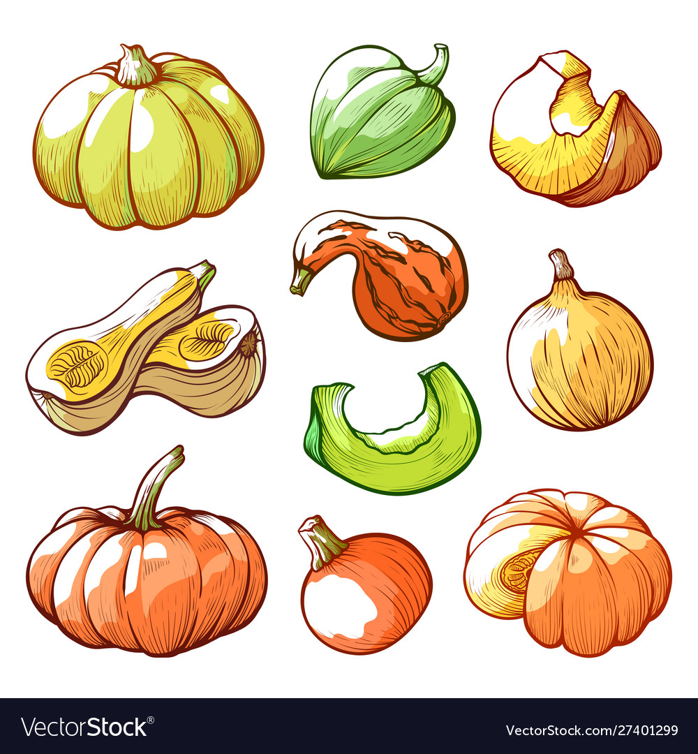 Sliced and whole pumpkins hand drawn