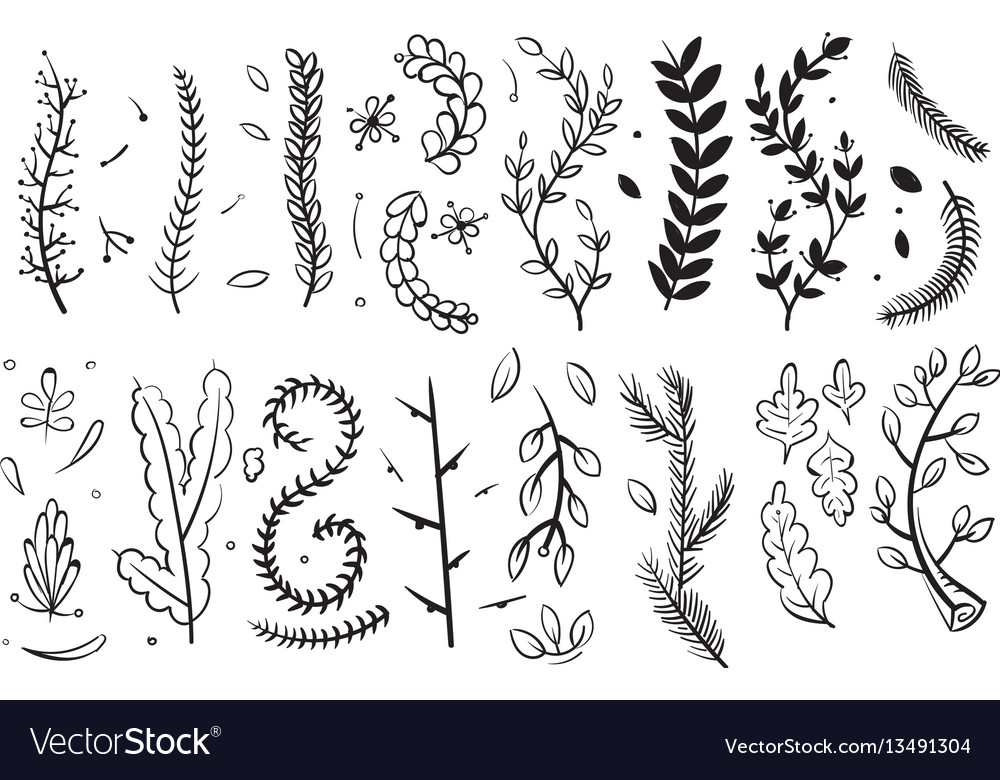 Hand drawn decorative branches with leaves and