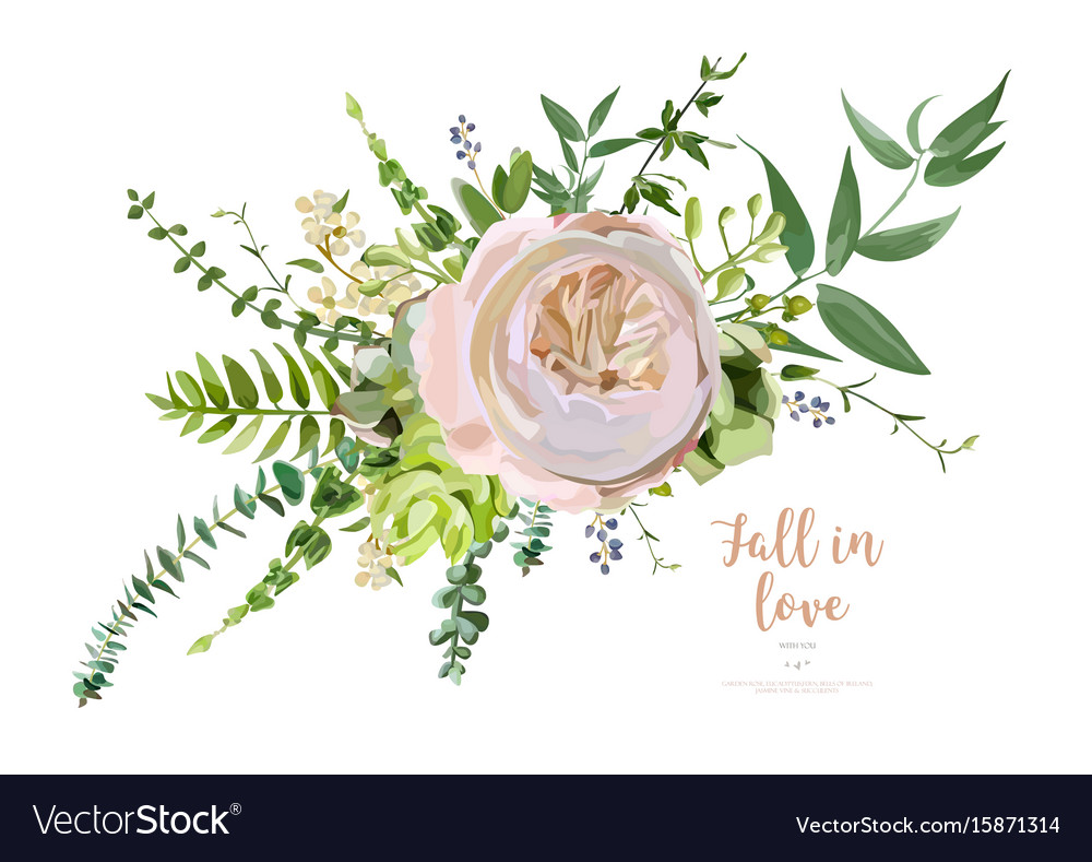 Bouquet element pink garden rose green vector
