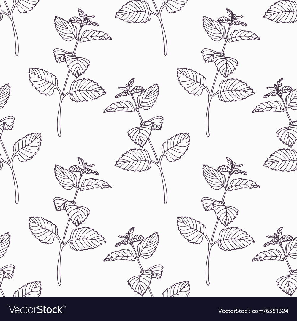 Hand drawn melissa branch outline seamless pattern vector image