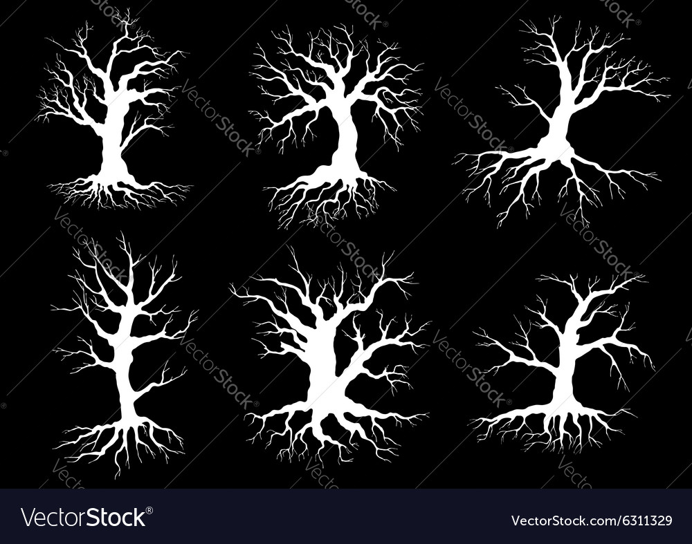 Dead old trees silhouettes with roots