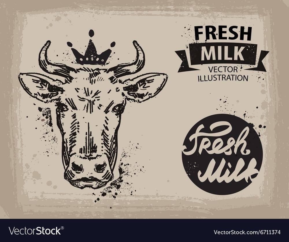 Cow logo design template beef milk or