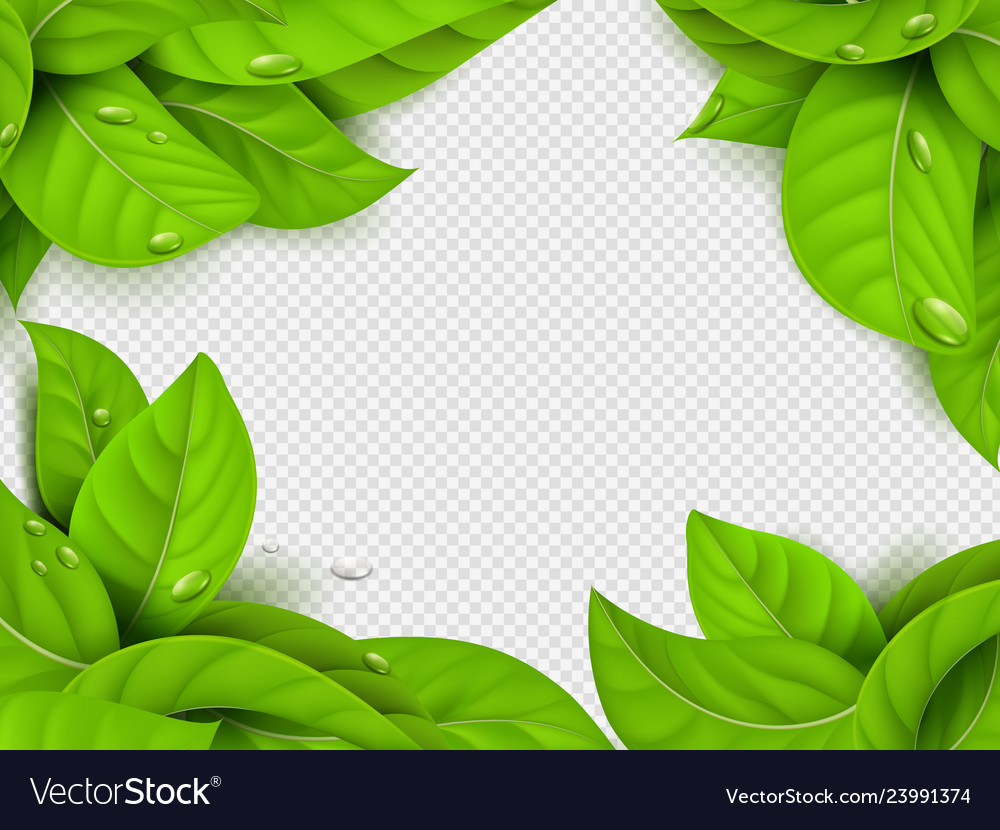 Realistic green leaves with drops frame
