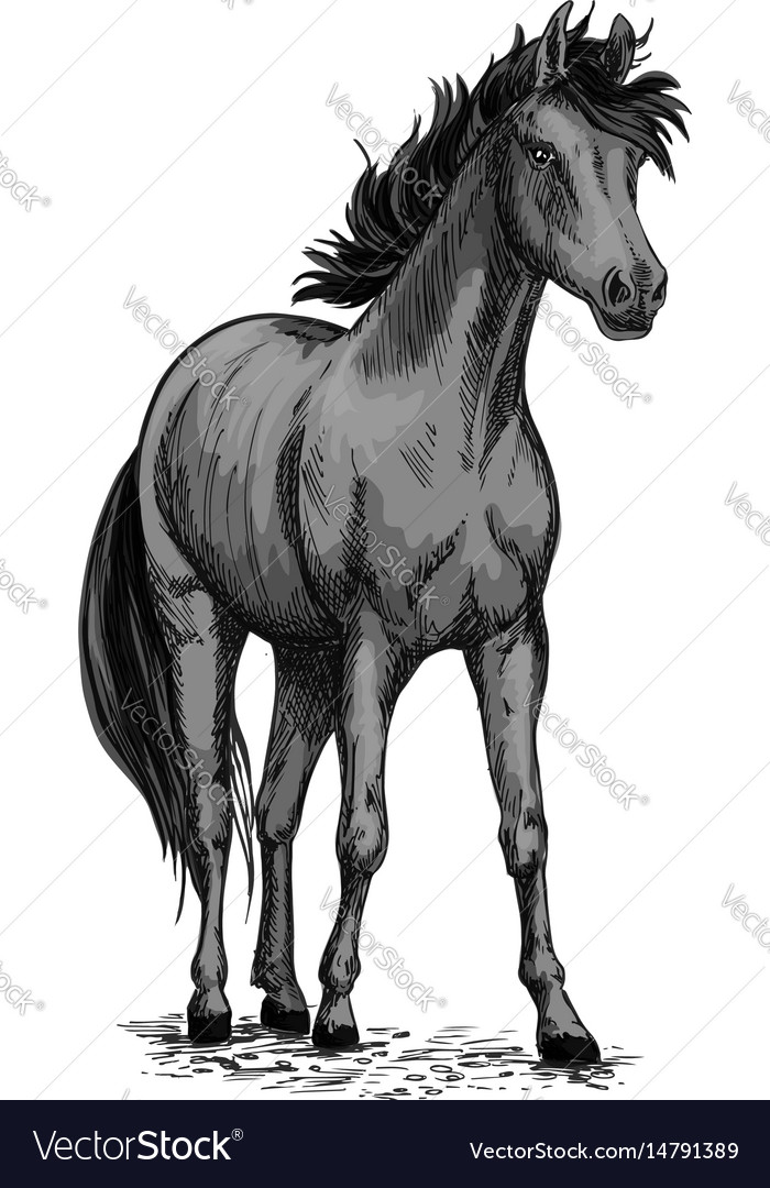 Horse Equine Sketch Symbol Royalty Free Vector Image