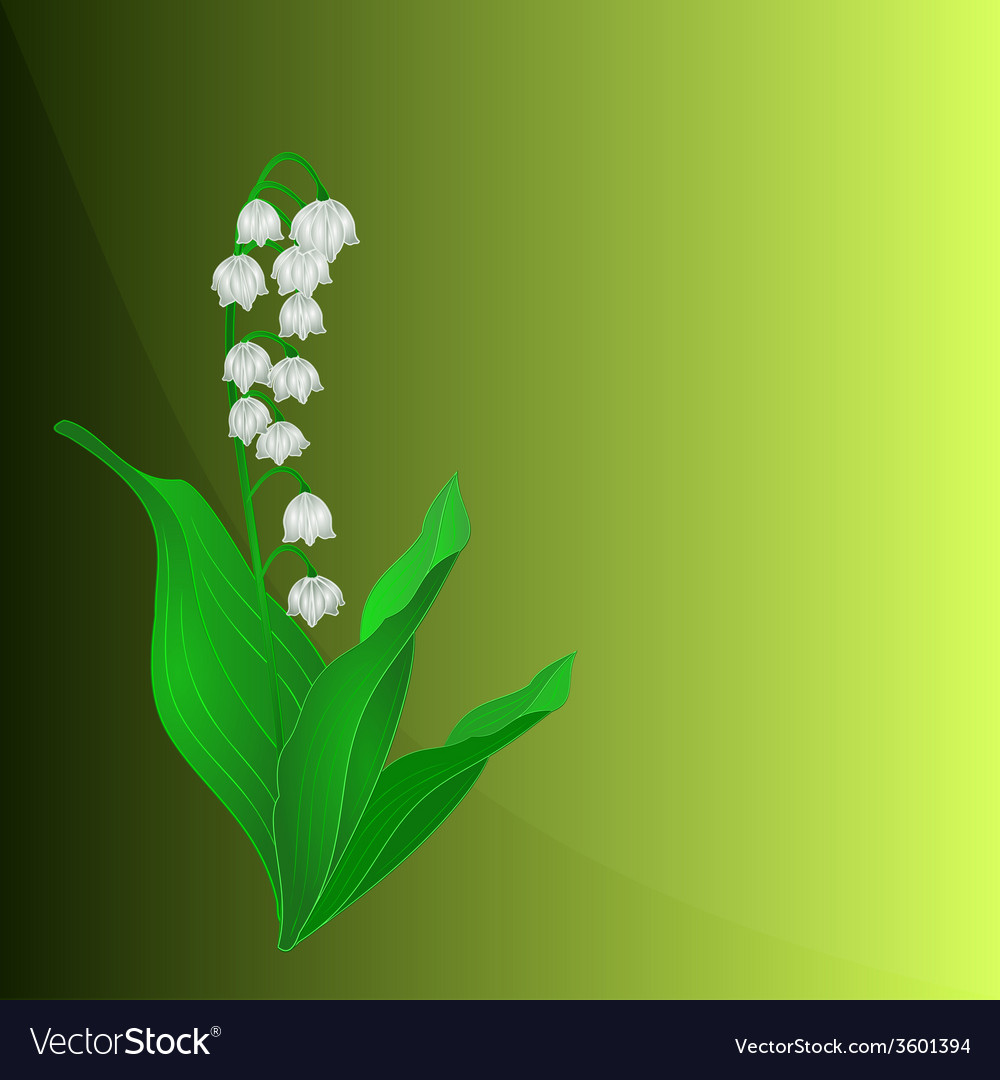 Lily Of The Valley Spring Flower Green Background Vector Image