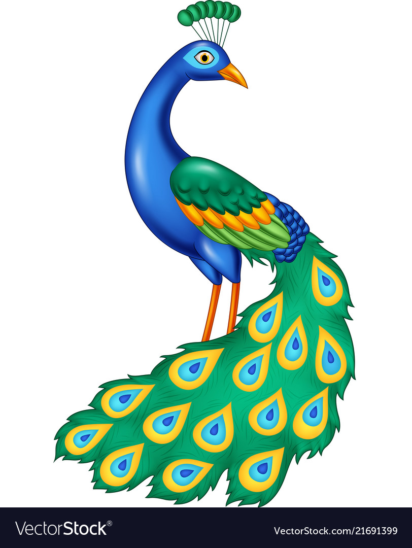 cartoon beautiful peacock royalty free vector image vectorstock