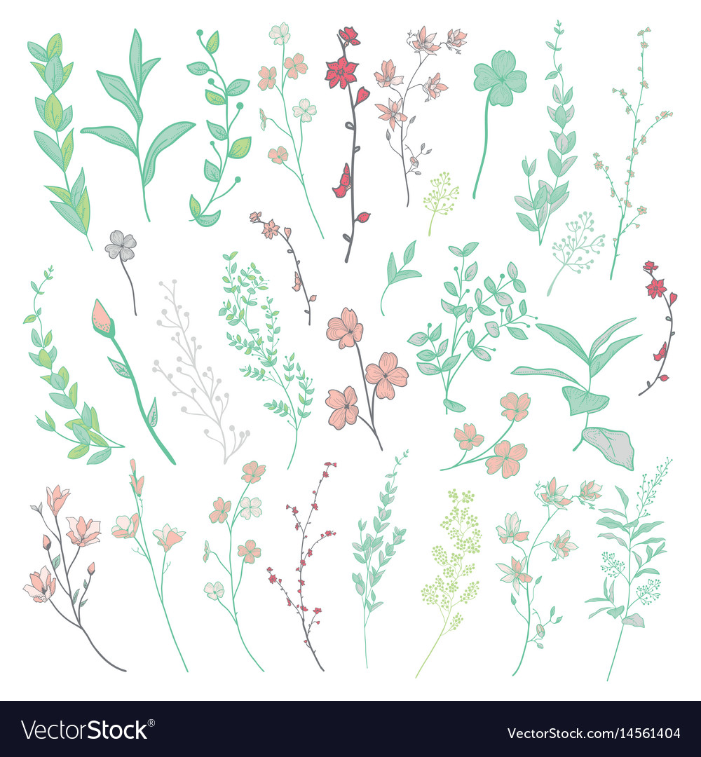 Colorful drawn herbs plants and flowers