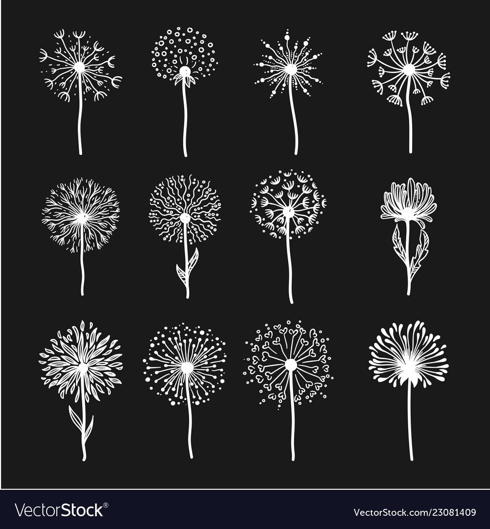 Tender wild dandelion in all phases of blooming