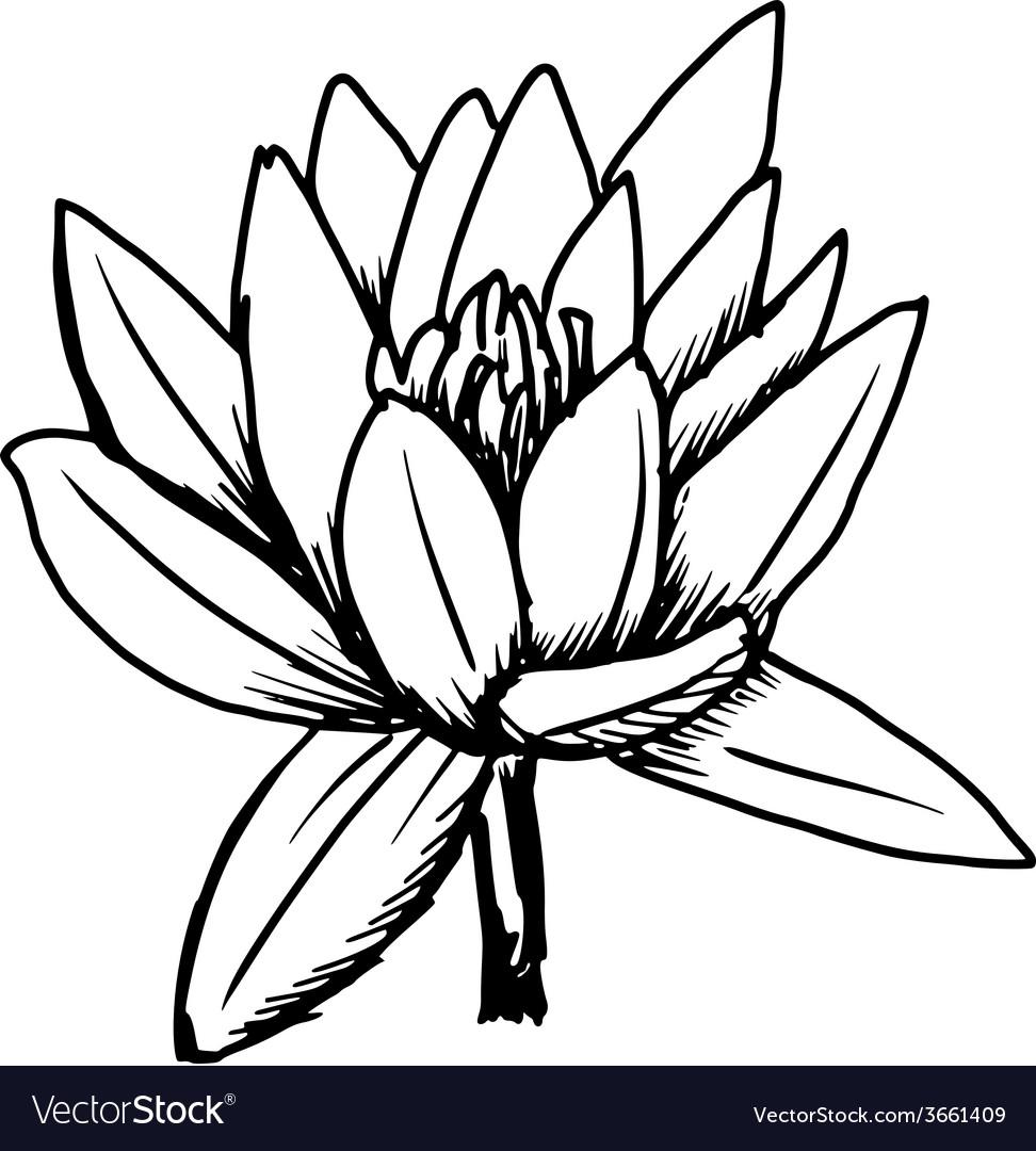 white lotus royalty free vector image vectorstock rh vectorstock com locus vector maps lotus victoria dr vancover bc