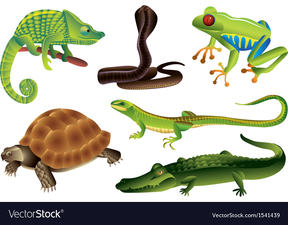 Reptiles amphibia