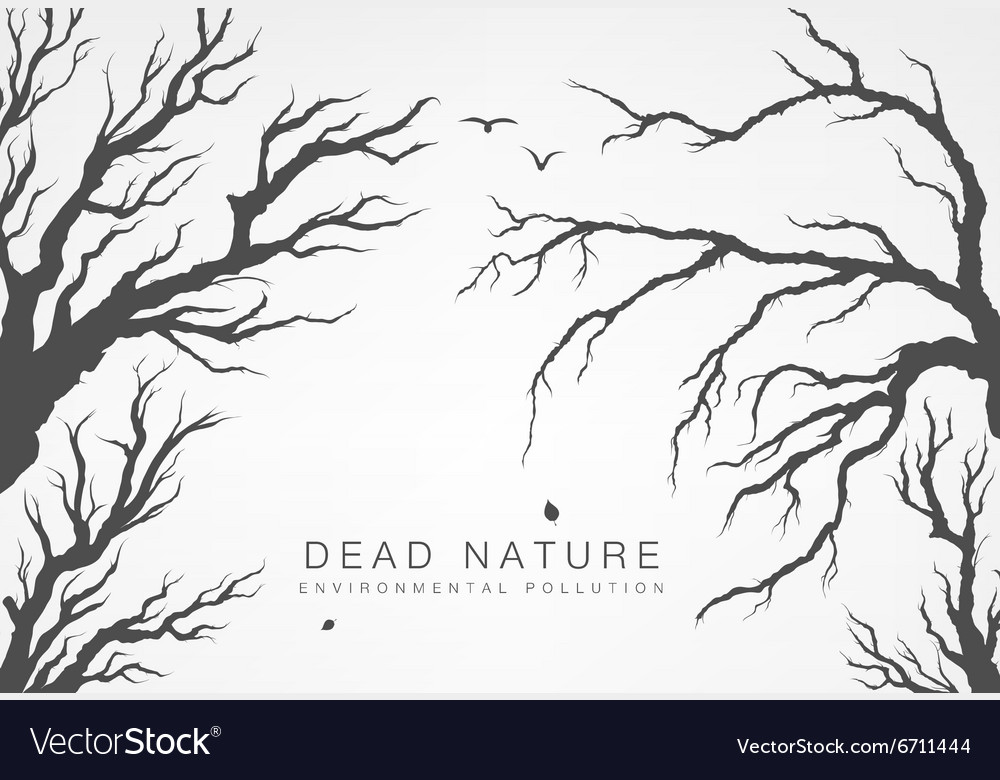 Dried tree branches with birds and leaves vector image