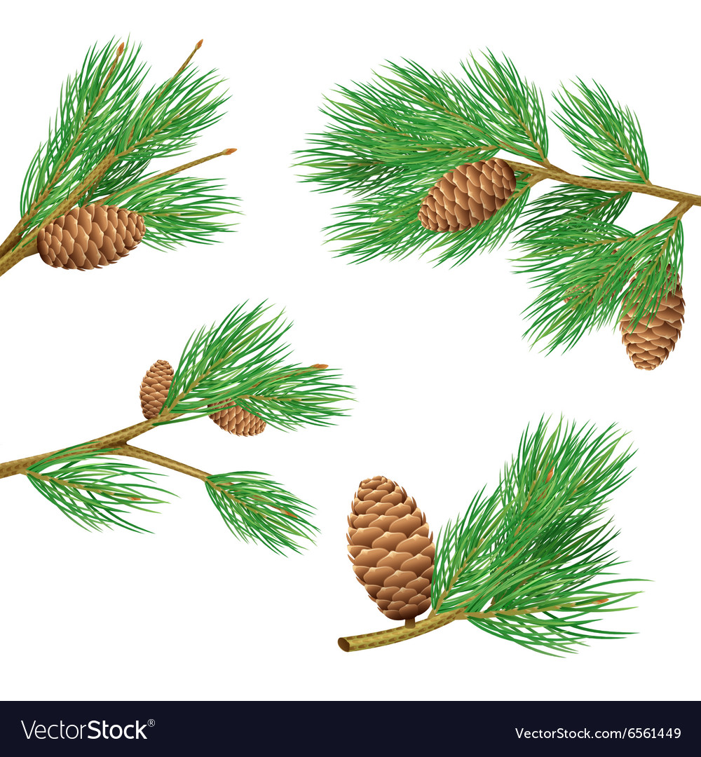 Pine Branches Set