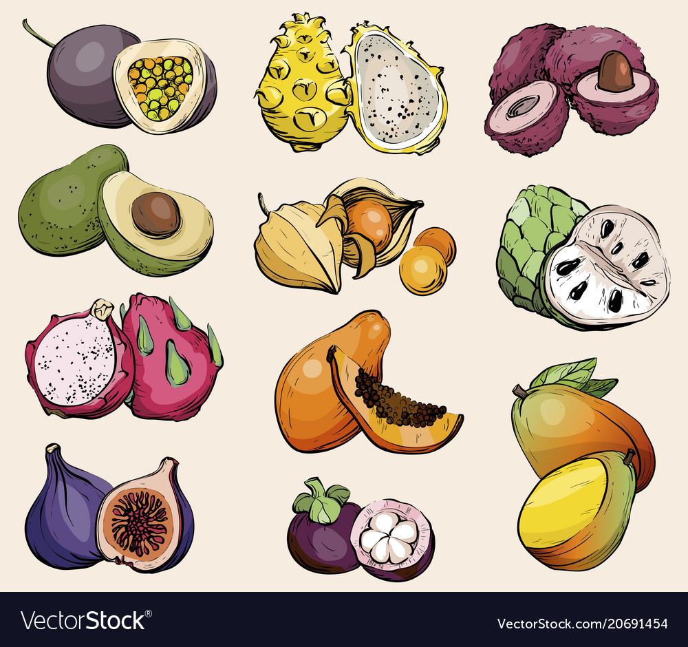 Hand drawn exotic summer fruit healthy food