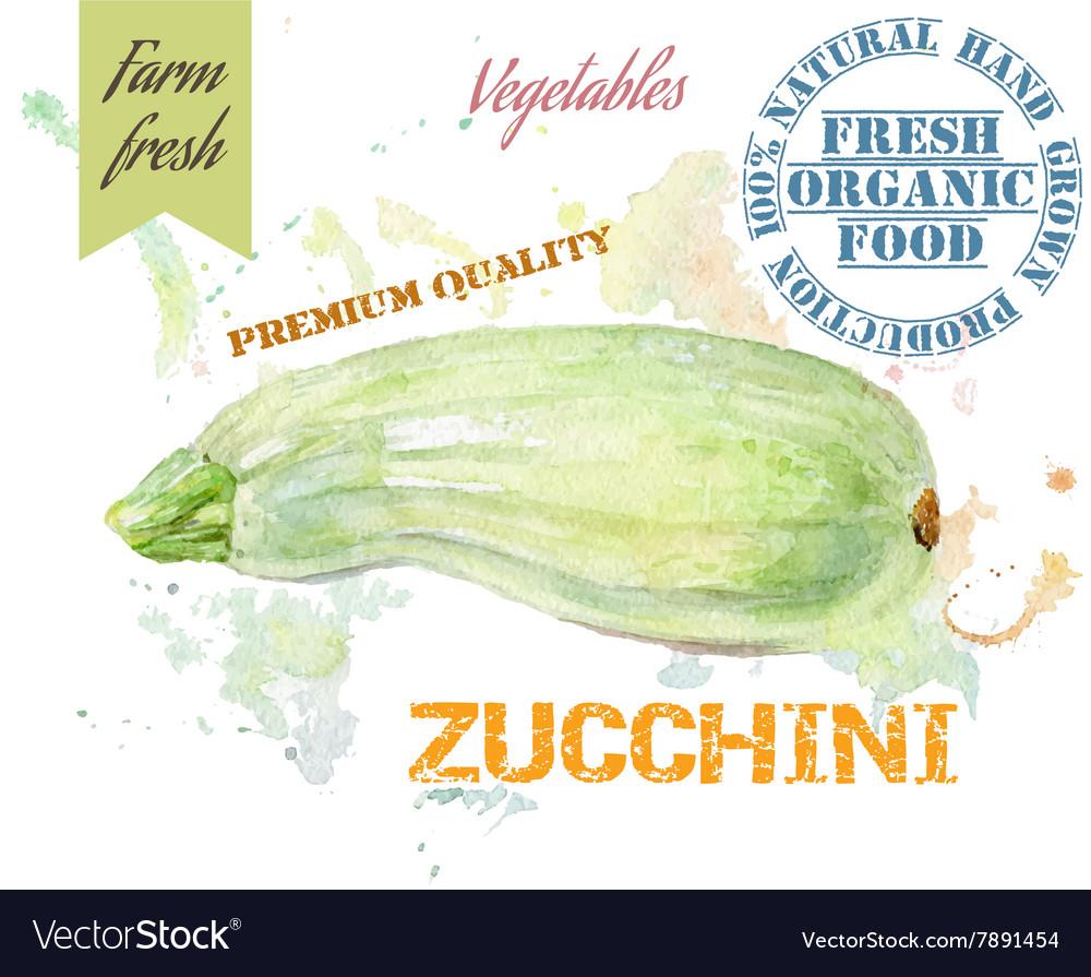 Zucchini watercolor banner vector image