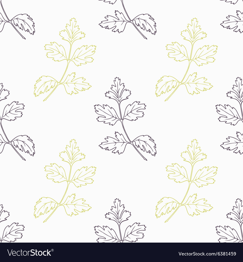 Hand drawn parsley branch stylized black and green vector image