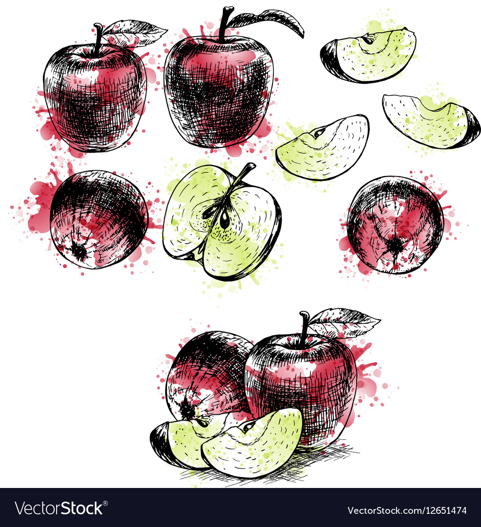 Watercolor Hand drawn set of apples sketch