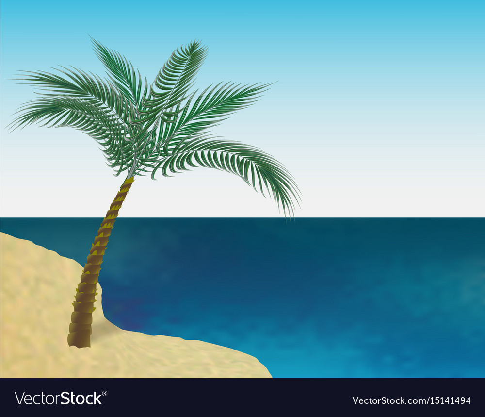 A tropical green palm tree on sandy beach of
