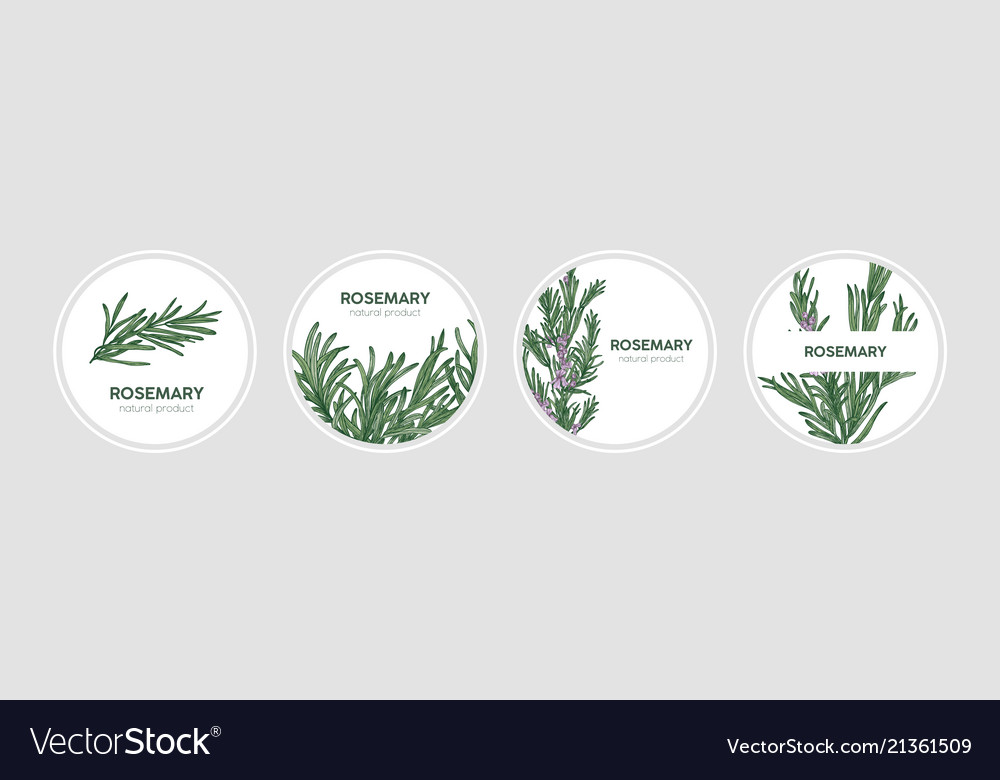 Collection of round labels decorated with rosemary
