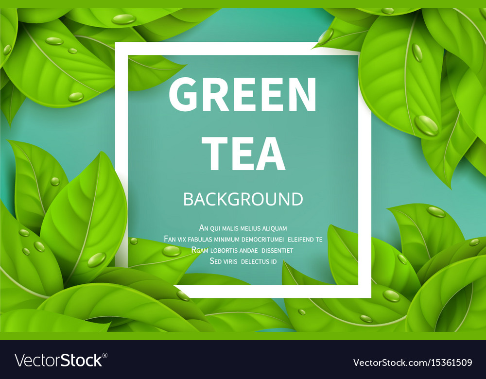 Green Tea Leaves Nature Background Vector Image