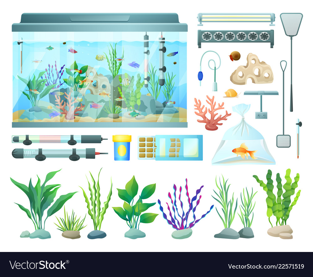 aquarium equipment and varied seaweed collection vector image on vectorstock