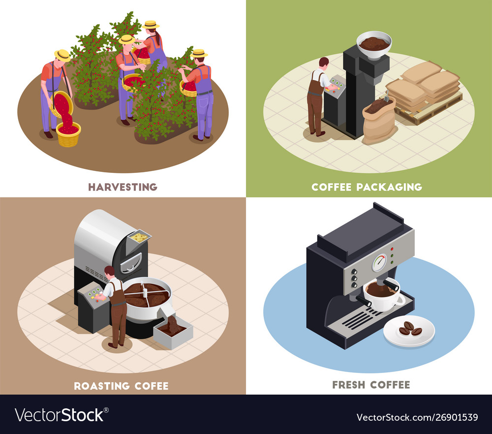 Coffee production isometric concept
