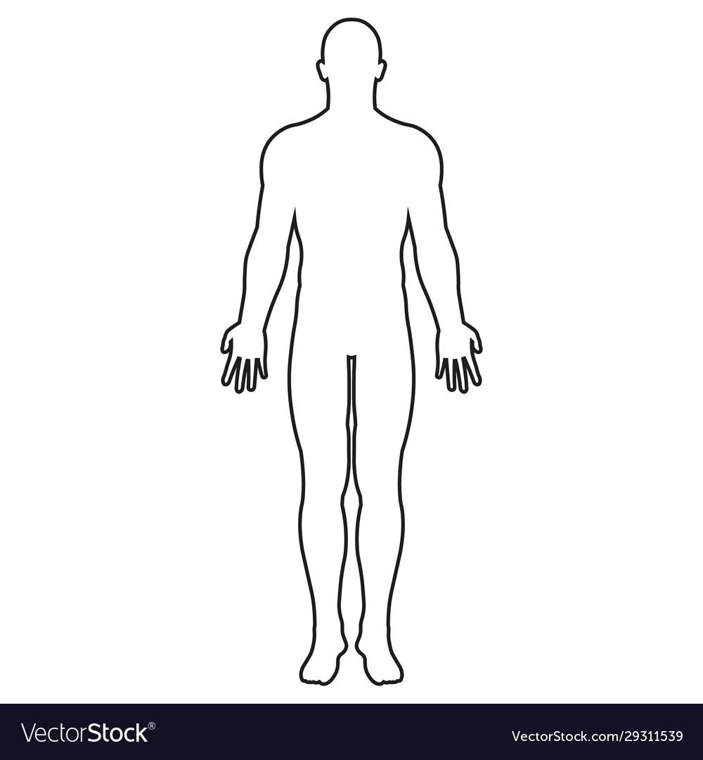 human body icon outline royalty free vector image  vectorstock