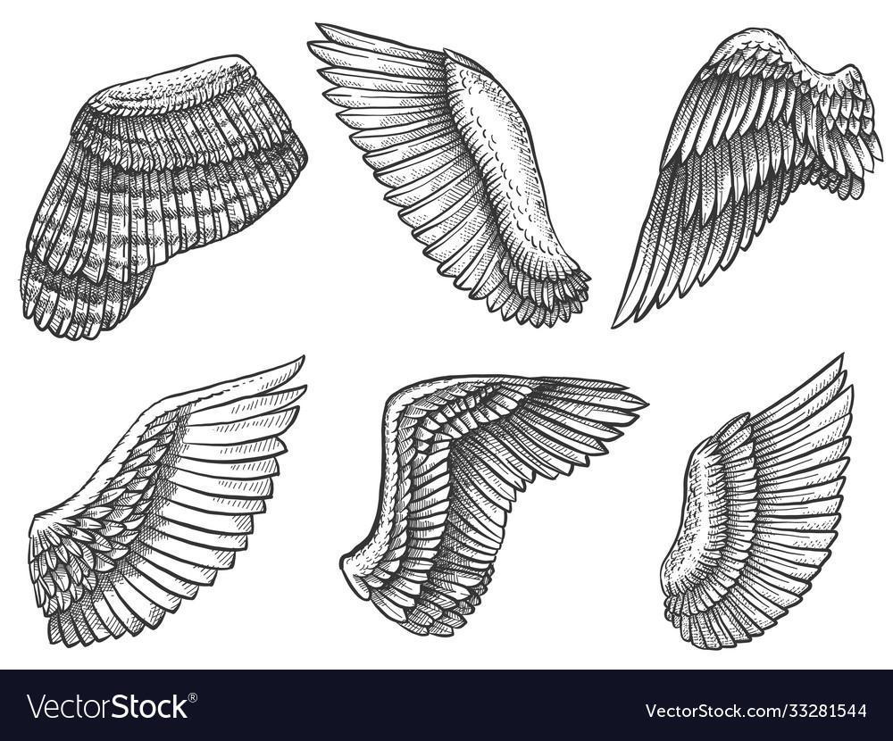Hand drawn wings sketch bird or angel wing