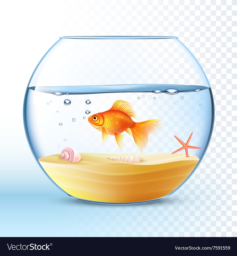 Golden fish 27