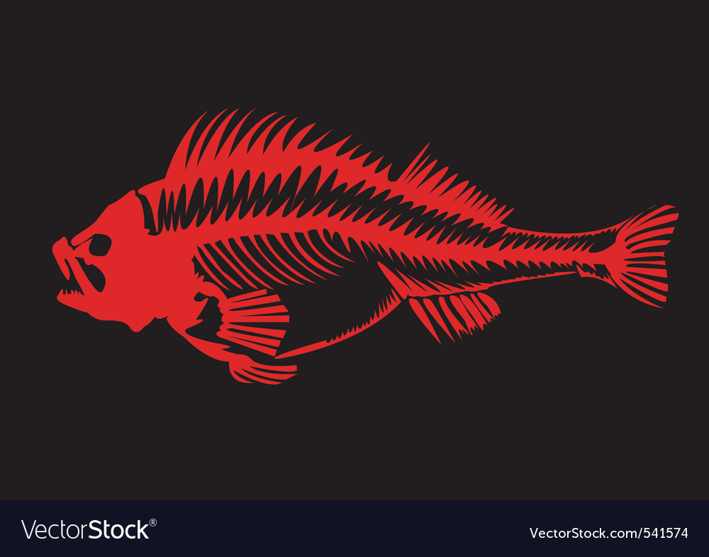 Skeleton of a fish vector image