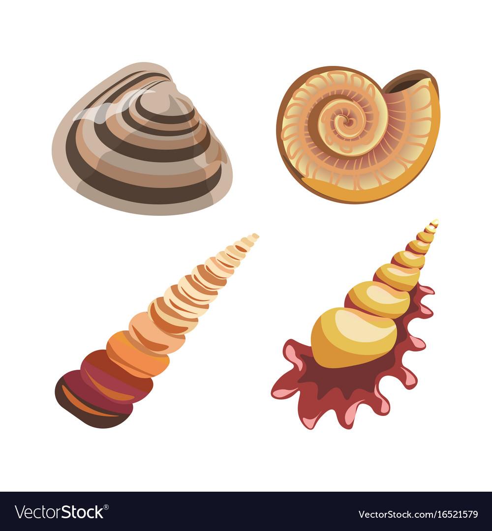 Set of decorative sea shells