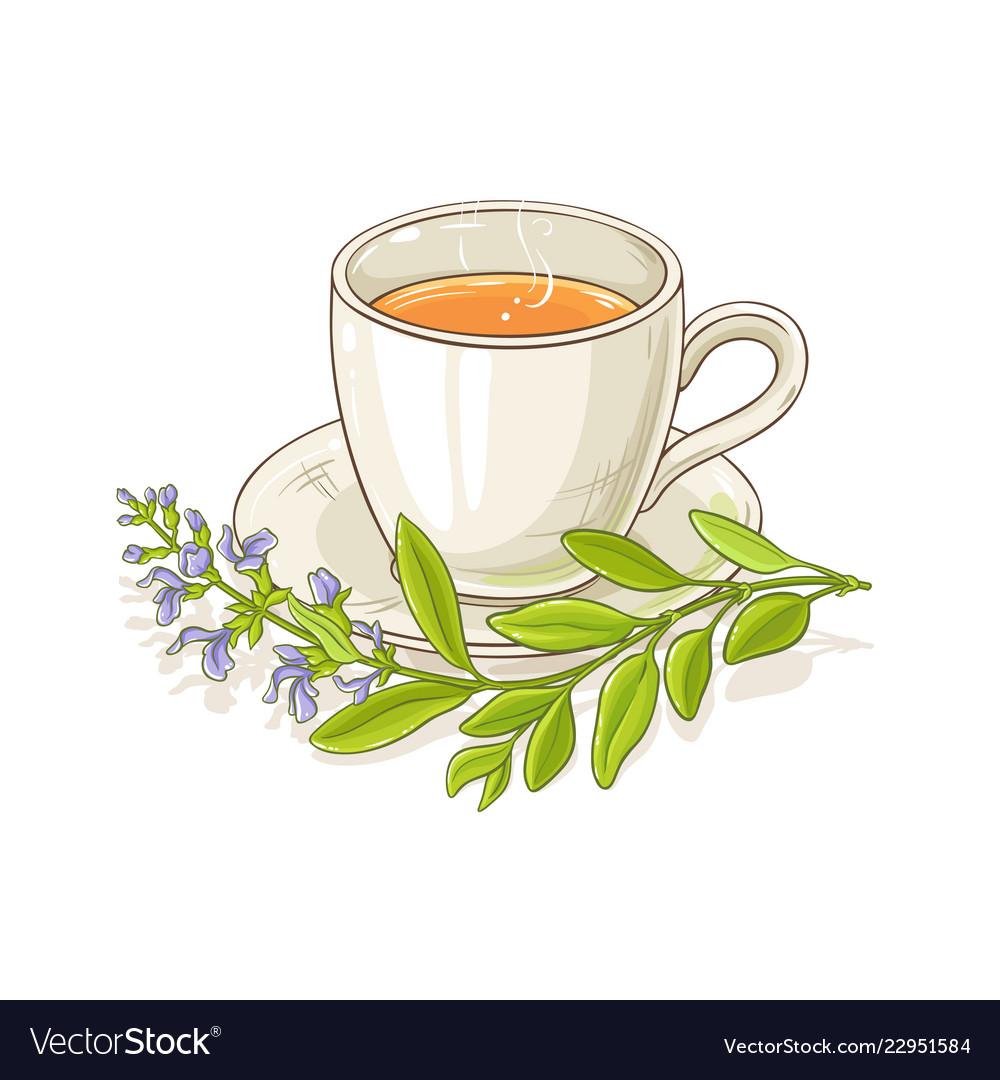 sage tea royalty free vector image vectorstock vectorstock