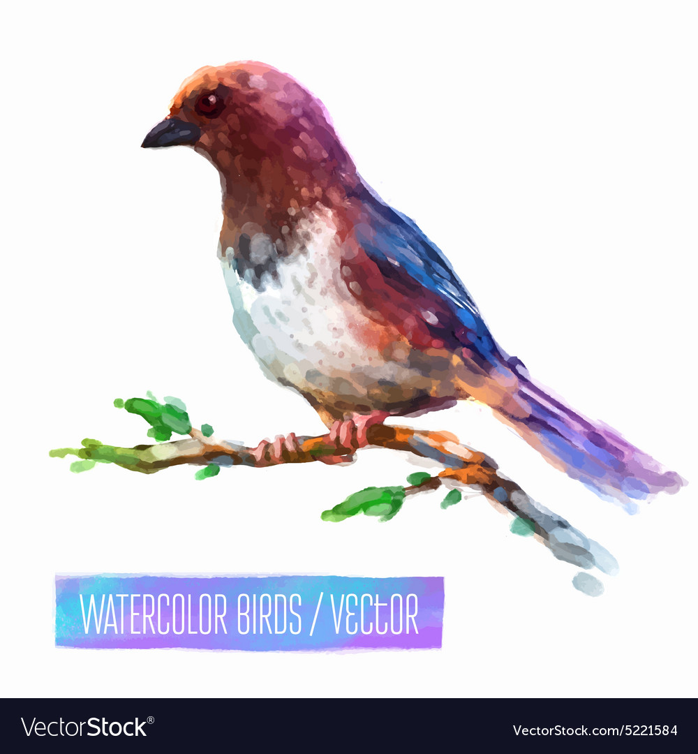 Watercolor style of bird