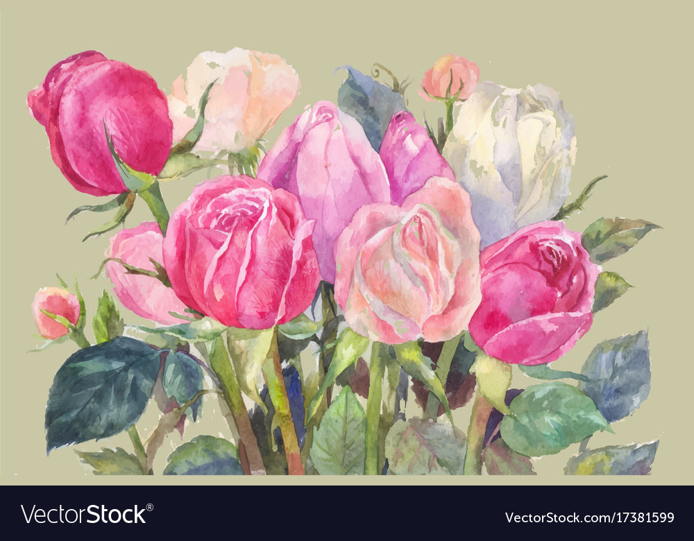 Pink roses watercolor vector image