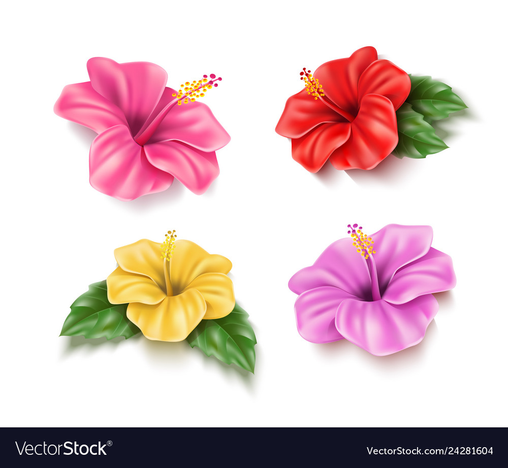 Red hibiscus realistic tropical flower set