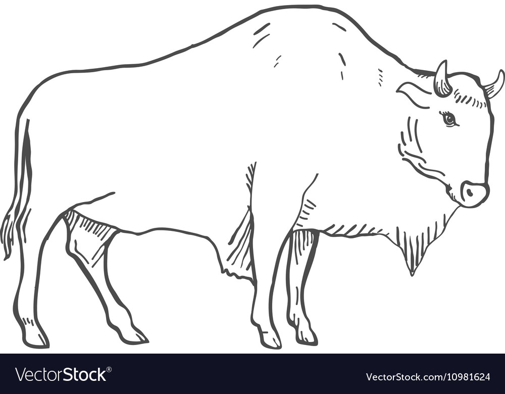 Hand Drawn Buffalo isolated on white
