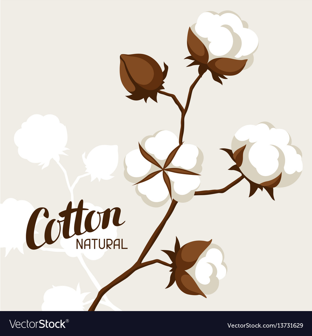 Background with cotton bolls and branches vector image