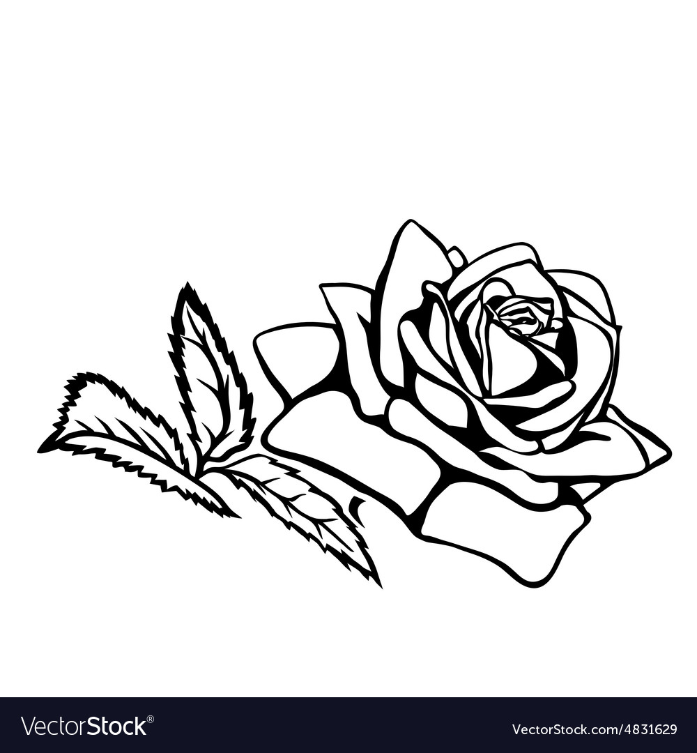 Rose Sketch Royalty Free Vector Image Vectorstock