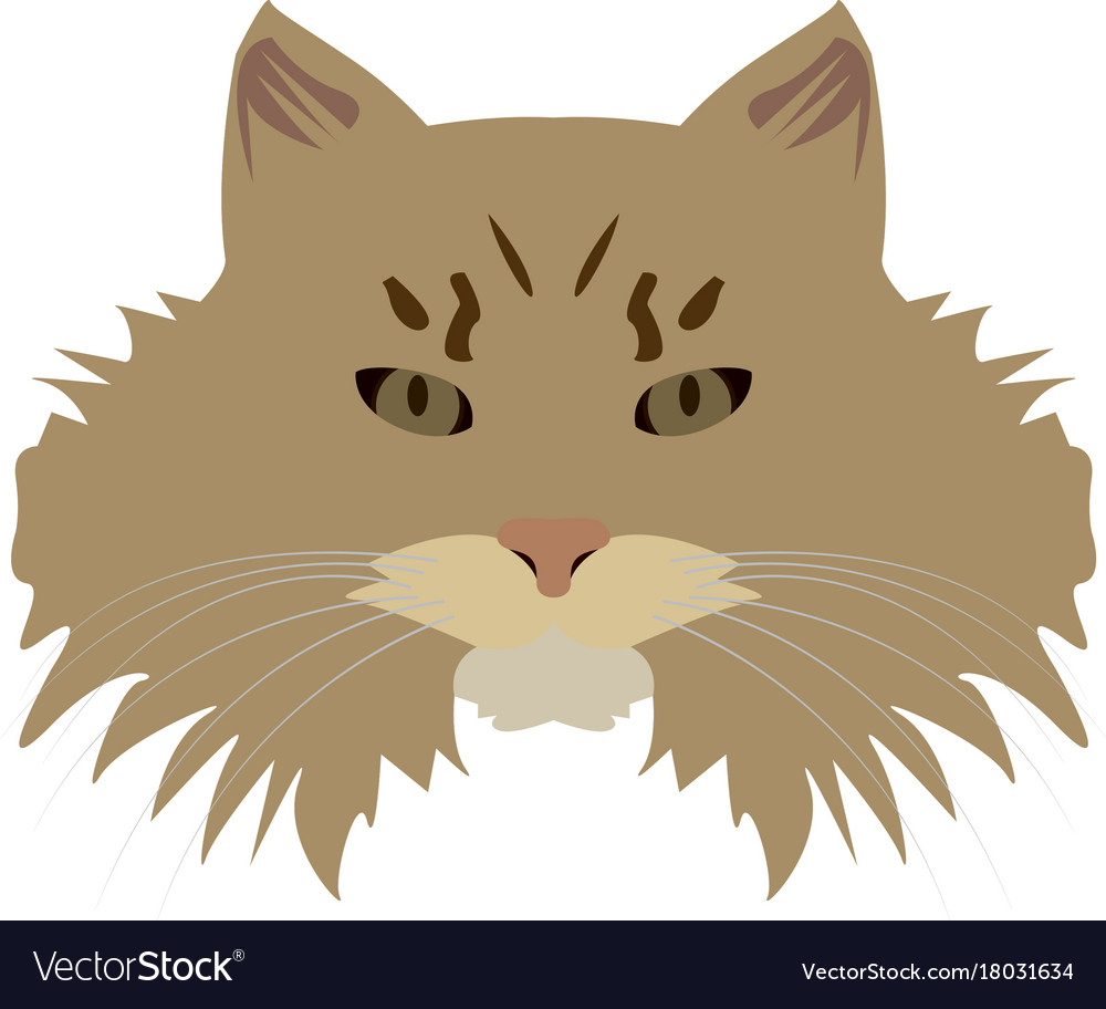 Isolated siberian cat vector image