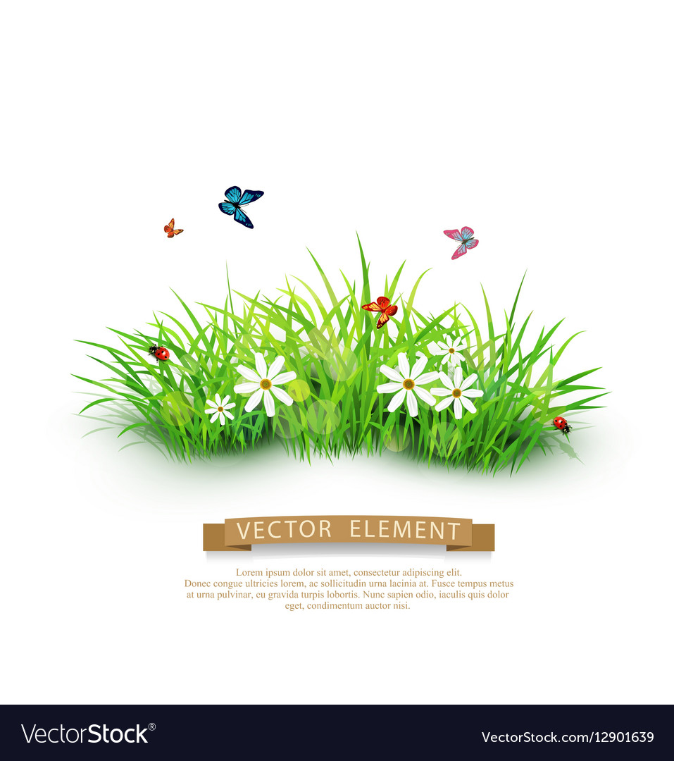 Green Grass With White Flowers Royalty Free Vector Image