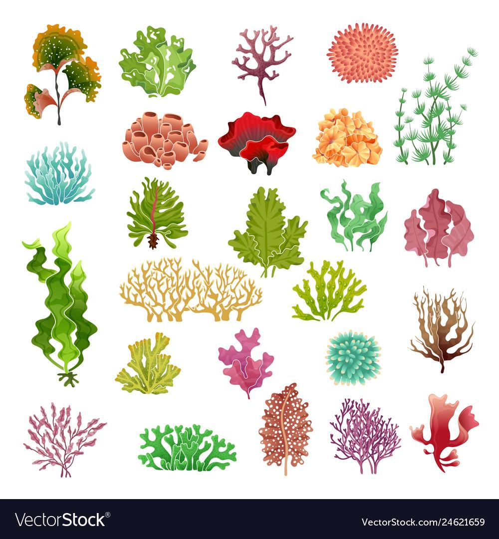 Coral and seaweed underwater flora sea water