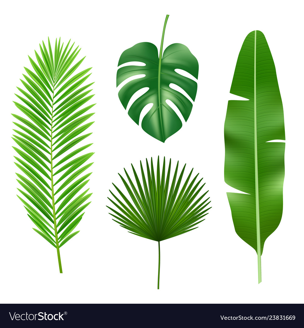 Tropical Leaves Jungle Green Plant Nature Vector Image Free for commercial use no attribution required high quality images. vectorstock