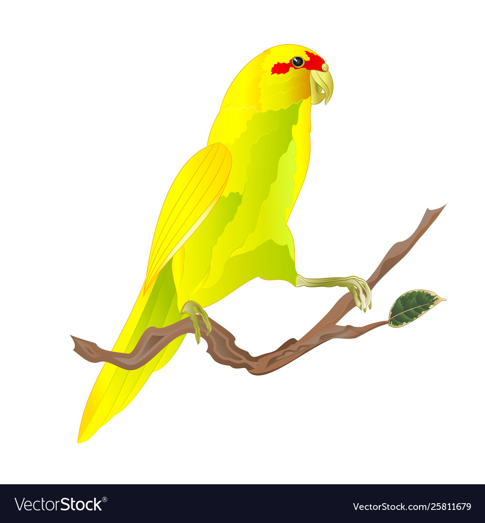 Bird Indian Ringneck Parrot In Yellow On Branch Vector Image