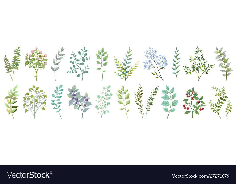 Greenery elements leaves branches foliage wedding