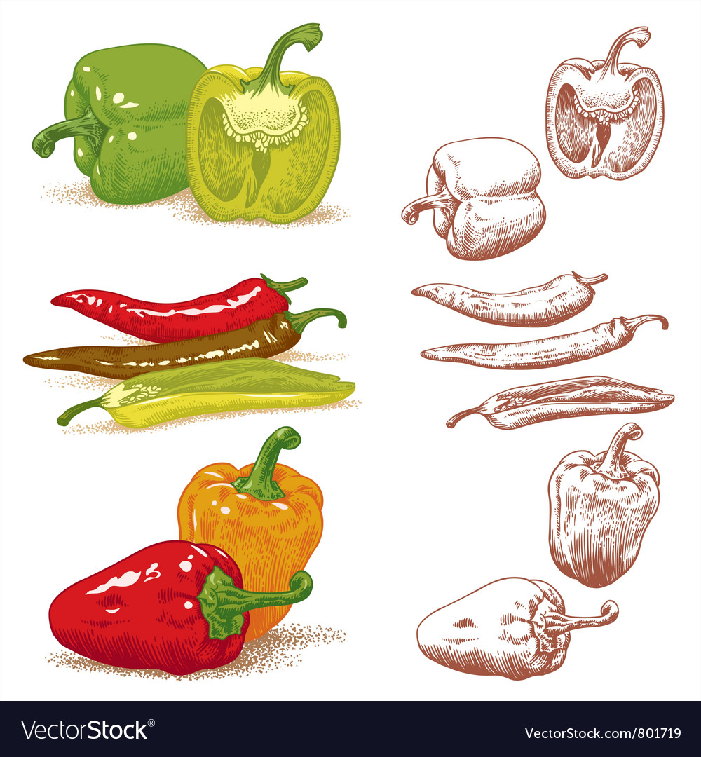 Peppers vector image