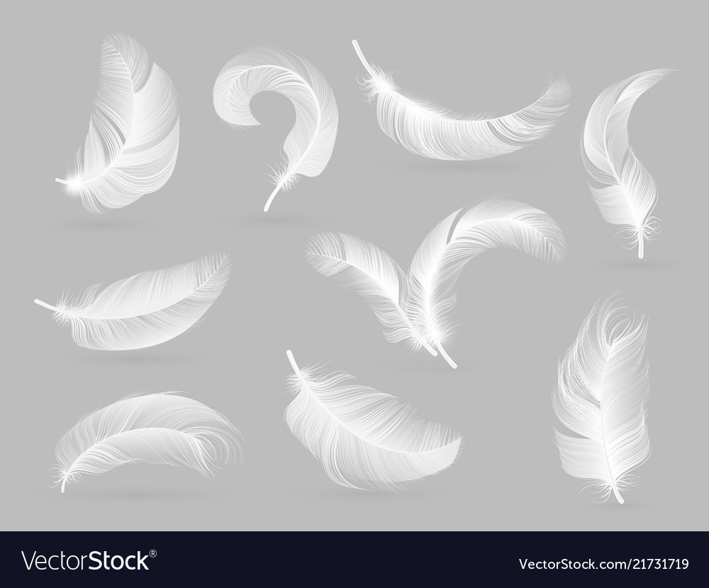 realistic feathers white bird falling feather vector image