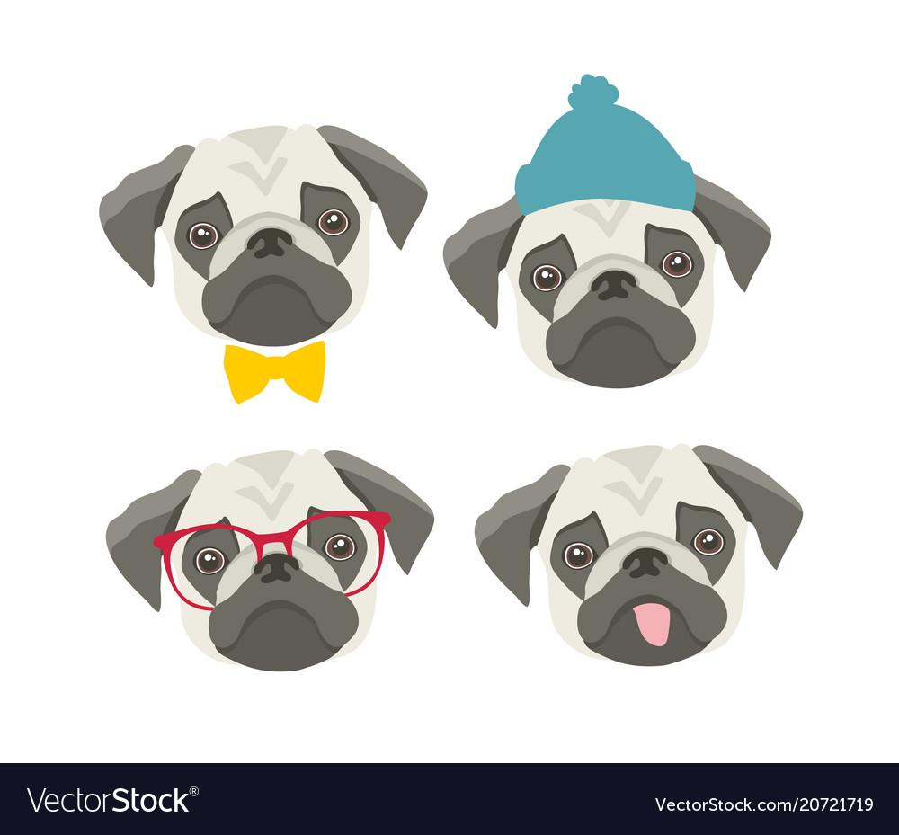 Set of pugs faces with accessories